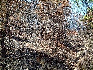 山火事の跡