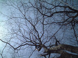 冬の空かも