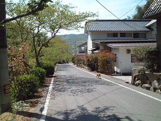本郷温泉の犬